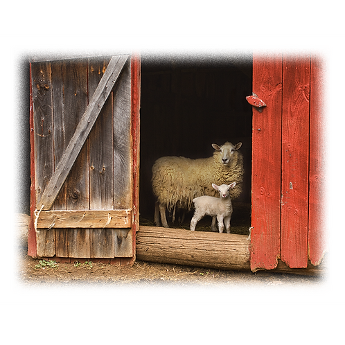 Sheep & Lamb (photo print)