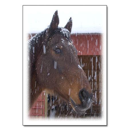 Bentley face in snow