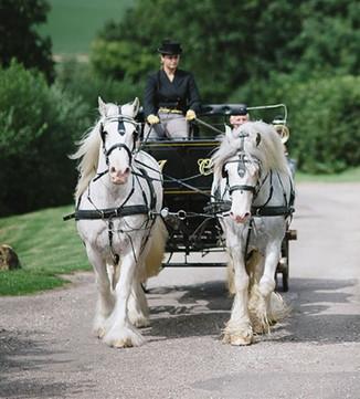 Horse drawn arrival
