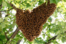 A Typical Swarm