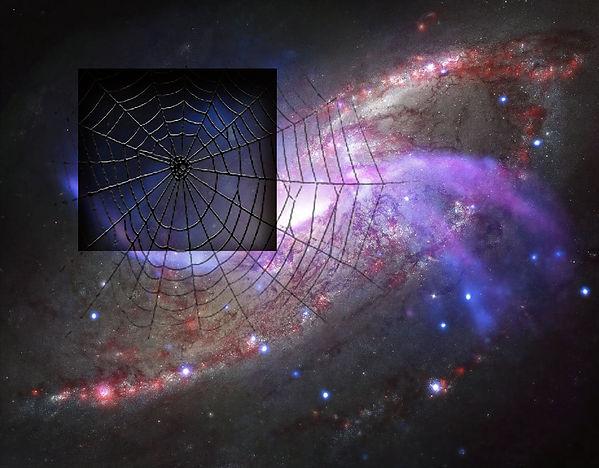 Universal Web.jpg