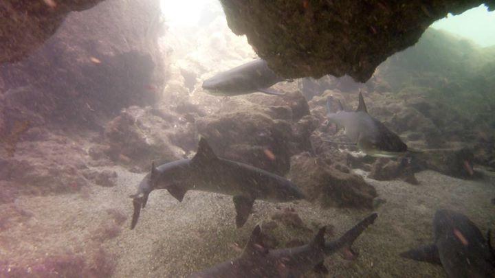 zwar nicht der erste Hai, aber so viele ..