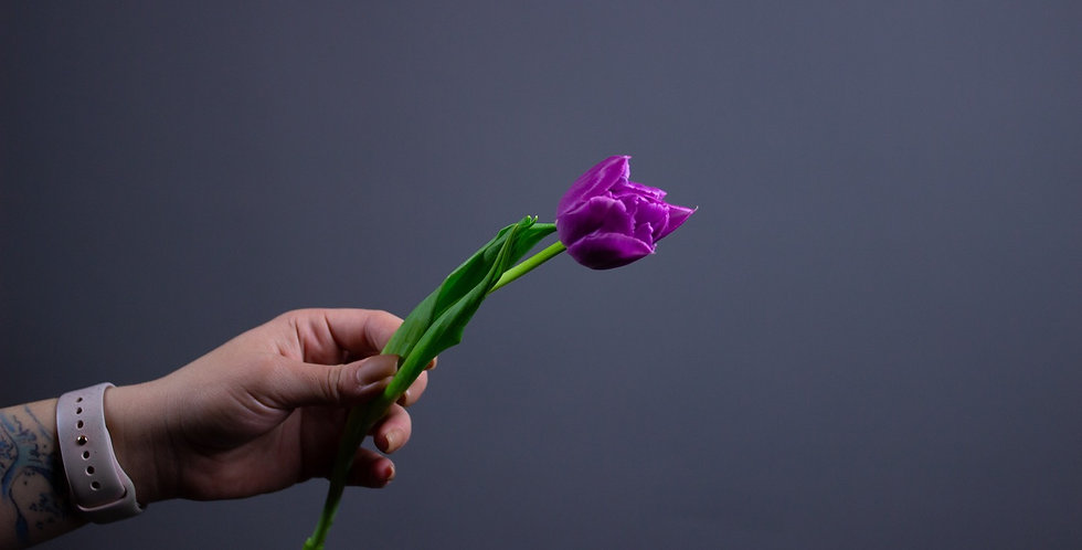 Пионовидный тюльпан Лаванда