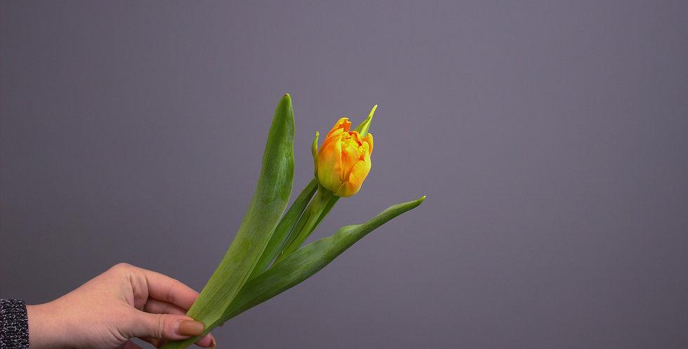 Тюльпан Пионовидный Оранж Принцесс