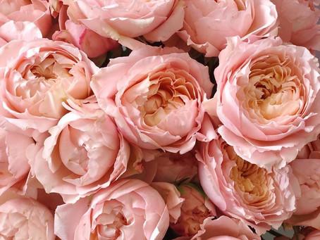Сколько живет роза Премиум дома: уход, рекомендации.
