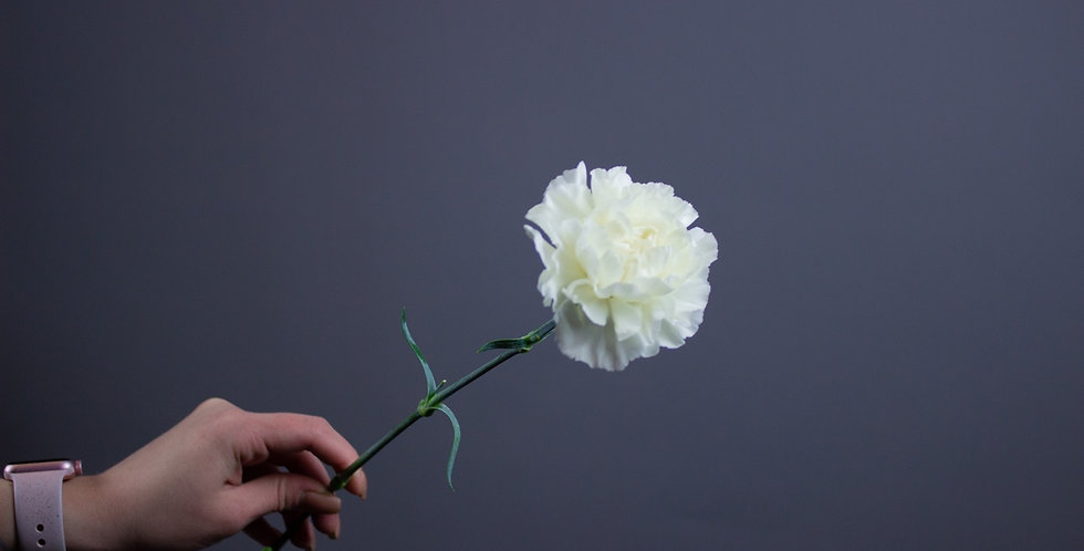 Диантус белый