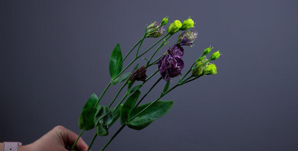 Эустома фиолетовая махровая
