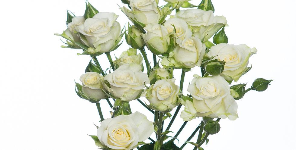 Кустовая Кенийская Роза Белая 40см