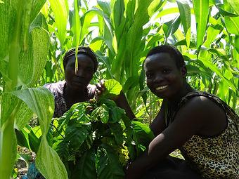 coffee farmers in Ugandan field