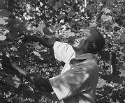 Timothy Njakasi