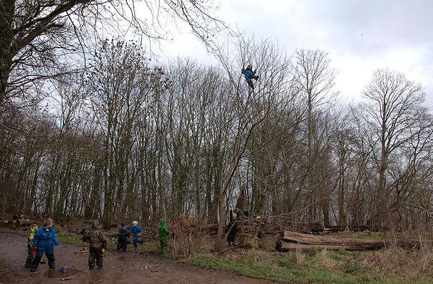 Danish forest kindergarten climbing tree