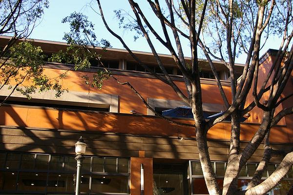 architecture shaped around tree canopy
