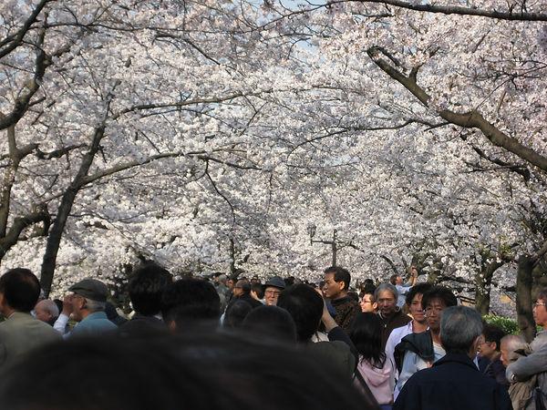 Sakura Ueno
