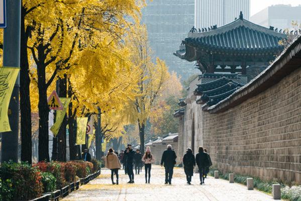 Seoul ginko
