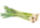 Chemical free tien qi leaf