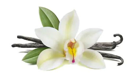 Vanilla Bean Flower.jpg