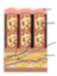 unhealthy dermal structure