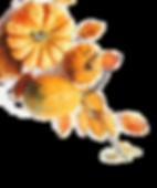 trans FotoliaComp_123948318_Xix6Y8pF5HJK