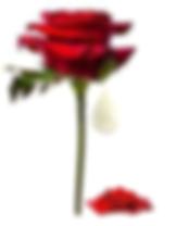 v rose.png