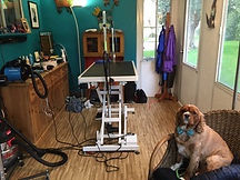 dog_grooming_studio.jpg