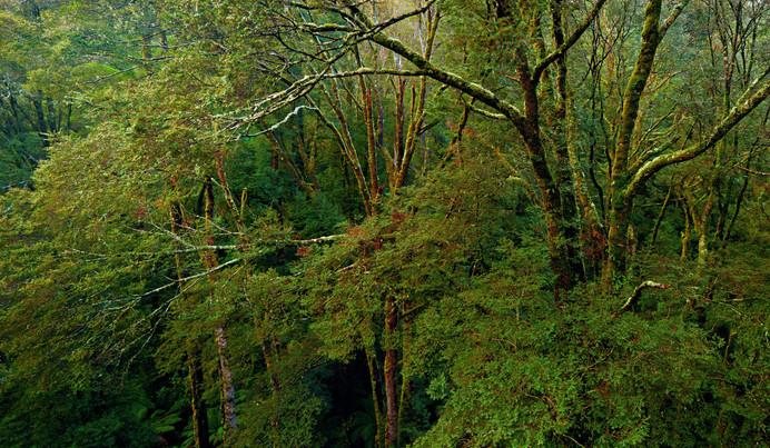 Beech_Trees.jpg