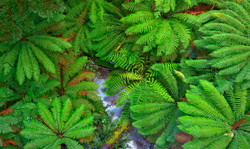 Ferns_Abstract