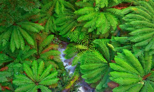 Ferns_Abstract.jpg