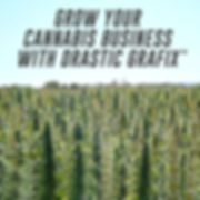 Drastic Grafix graphic design cannbis