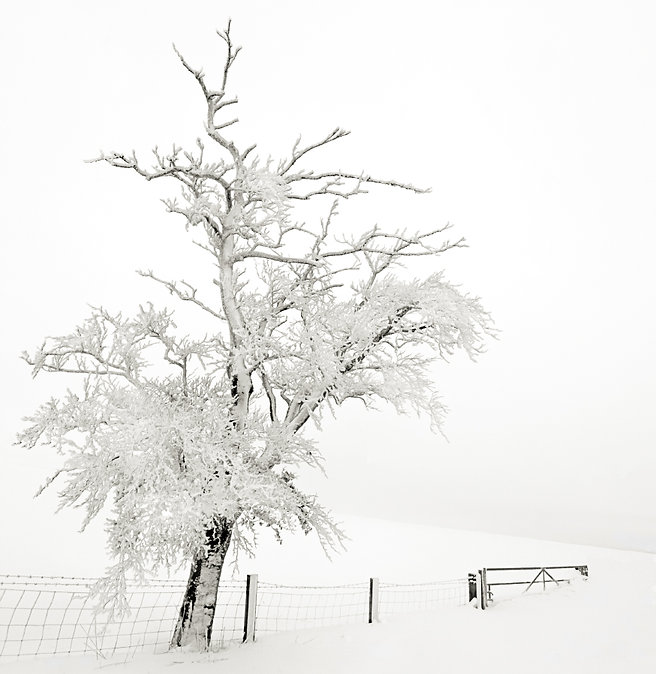 Frozen Tree Teesdale.jpg