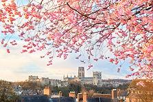 blossomflowers.jpg