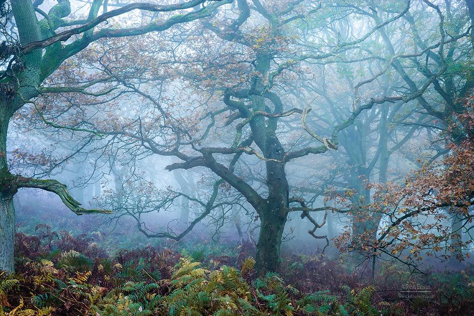 Mystical Forest.jpg
