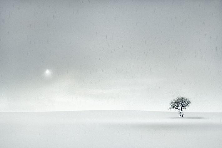 Winter-Tree.jpg