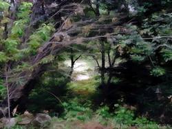 Ojai Landscape 23