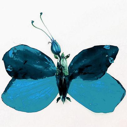 mystery butterfly a.jpg