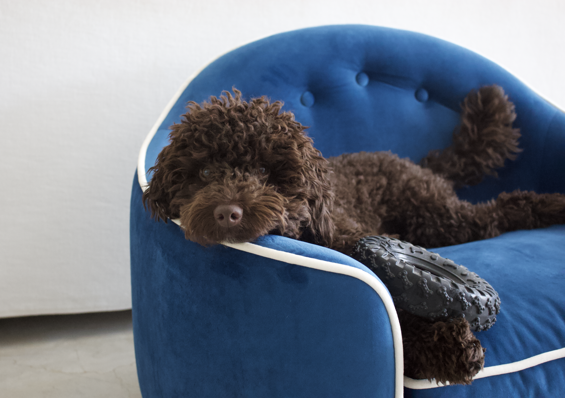 Luxury-blue-dog-bed