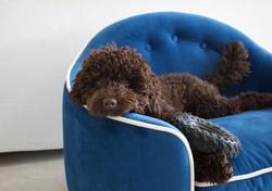 Luxury-blue-dog-bed