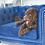 Thumbnail: The Posh Poodle