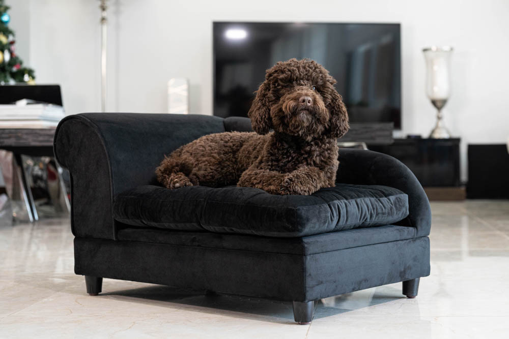 BLACK BICHON CHAISE