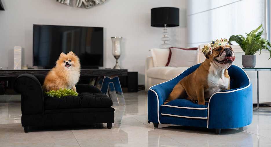 luxury%20dog%20beds_edited.jpg