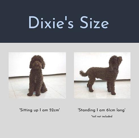 Dixie's%20Size%20(2)_edited.jpg