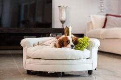 Luxury dog bed dubai