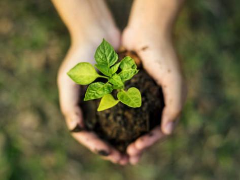 La sustentabilidad en el mercado inmobiliario comercial: FIBRAShop