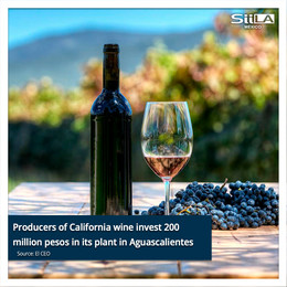 Producers of California wine invest 200 million pesos in its plant in Aguascalientes