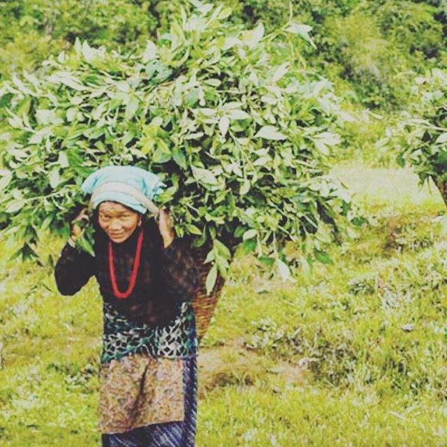 Woman carrying Wintergreen on her back