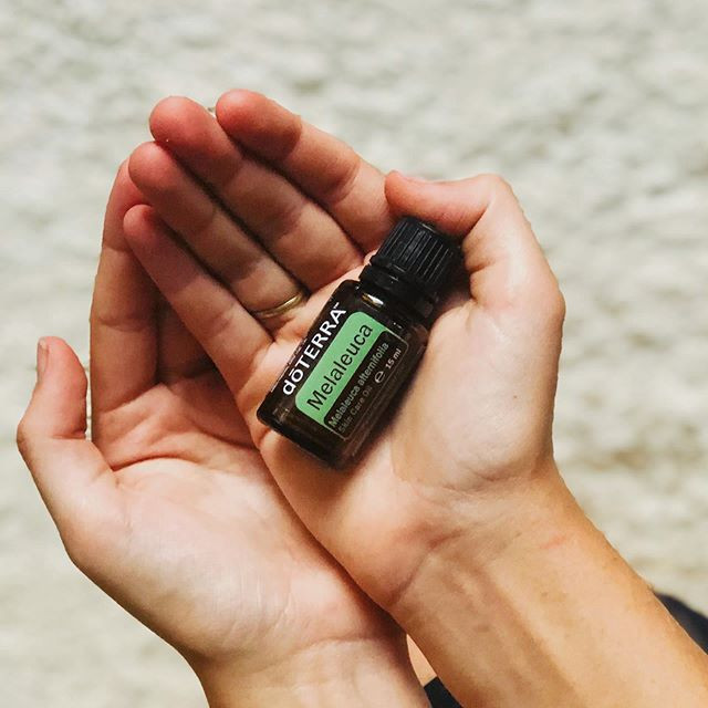 Hands holding a bottle of Melaleuca/Tea Tree oil