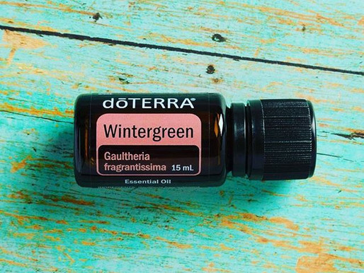 Focus on... Wintergreen