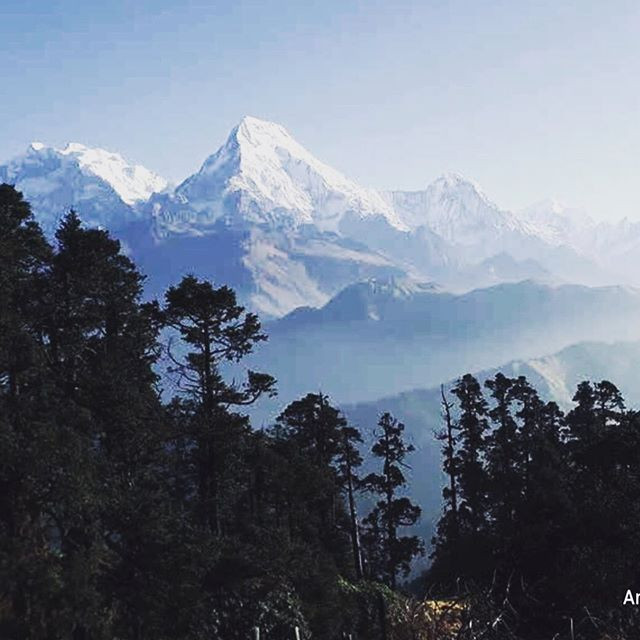 Mount Everest and fir trees