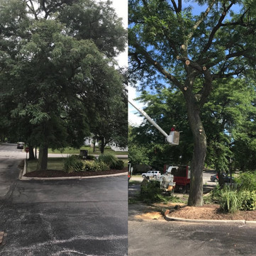 Tree Remo002.jpg