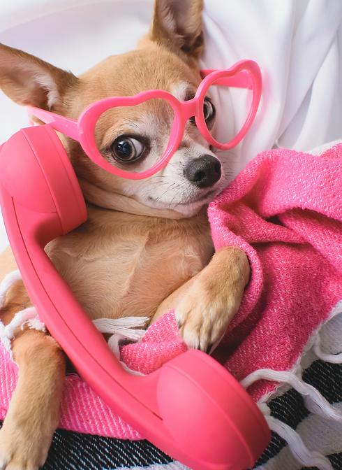 Hond bellen.png