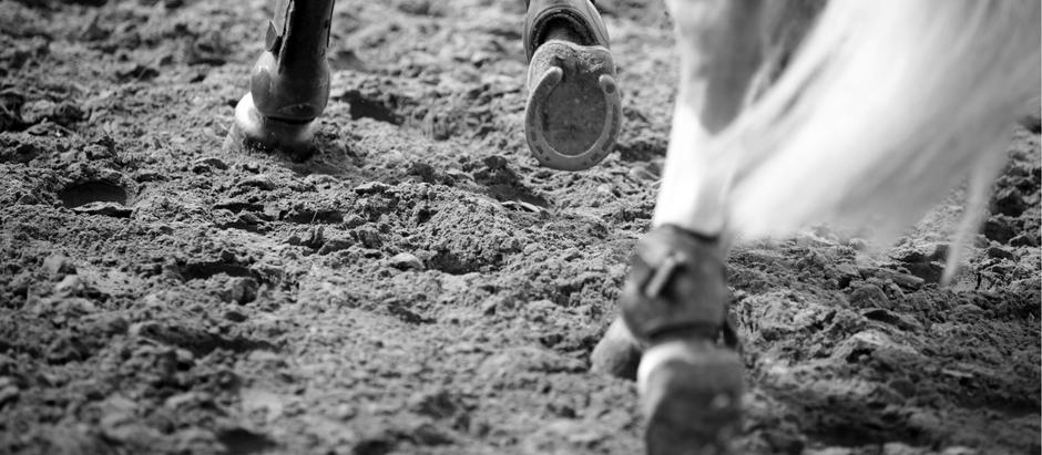 Eventos equestres e pandemia | Jeito de Cowboy